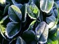 哈爾濱氣溫低迷迎霜凍 陽光下植被銀光閃爍