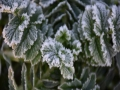 甘肅廣河最低氣溫跌至0℃以下 霜花潔白如雪