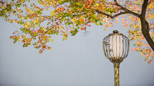 秋天能有多美?一組高清美圖告訴你