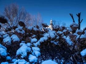 哈爾濱迎立冬后首場降雪 樹枝掛滿銀條晶瑩剔透