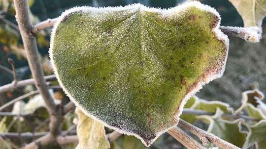 甘肅渭源最低溫降至0℃以下 植物披濃霜