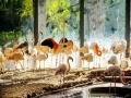 分分钟拍出网红大片!北京动物园火烈鸟园区美如仙境