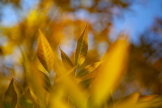 北京暖陽下五彩斑斕的秋葉光彩依舊
