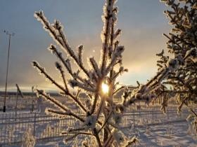 内蒙古图里河现雪淞景观 阳光下银光闪烁