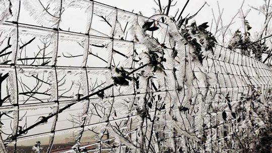 湿冷魔法攻击!湖南八面山冰封素裹 草木披冰衣