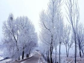 青海马营镇现雾凇景观 犹如千树万树梨花开