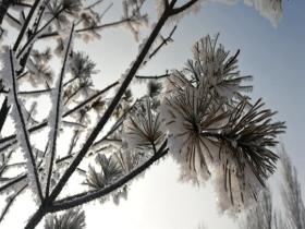 草木凝霜花 内蒙古鄂托克前旗雾凇景观美轮美奂