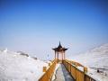 ?甘肅烏鞘嶺雪后初晴天空通透藍 牦牛雪中悠閑漫步