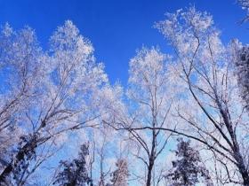 黑龙江第一峰现雾凇景观 堪比仙境