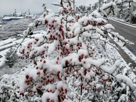 下雪啦!贵州多地今冬初雪如期而至 天地浑然一体