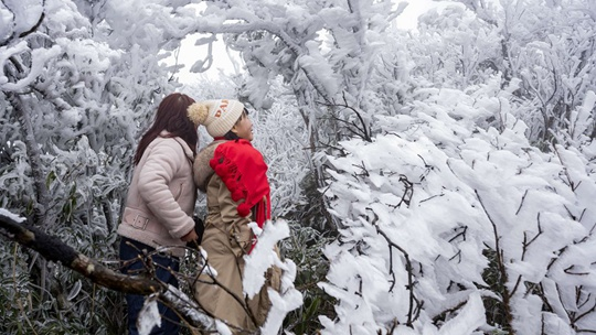 廣西大明山現霧凇美景 吸引游人觀賞拍照