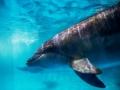 克服50℃超大温差 哈尔滨极地公园成功引进海豚