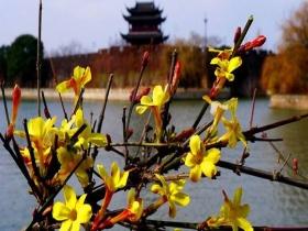 """苏州""""四九""""暖如春  朵朵花开迎""""大寒"""""""