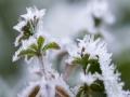 貴州玉屏:綠植穿戴霜花 若隱若現呈現朦朧美