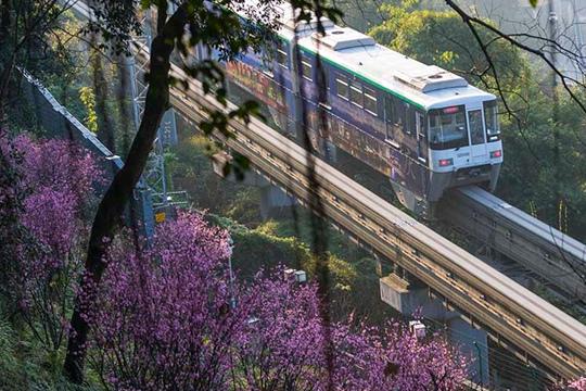 重慶開往春天的列車來了!穿越花海形成靚麗風景線