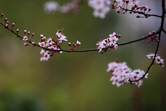 最惊艳的春天 都藏在这些中国风的图里