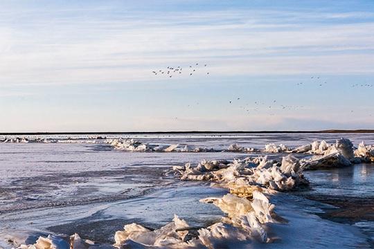 春的脚步近了!青海湖冰雪正消融
