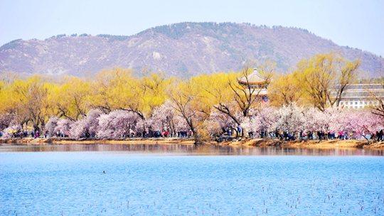北京颐和园花朵初绽 蓝天暖阳下生机盎然