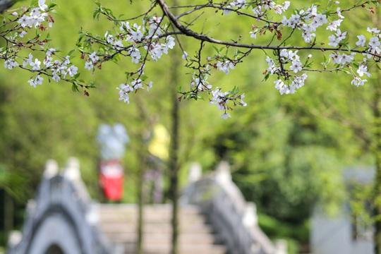 湖南衡阳天朗气清 西湖公园鸟语花香