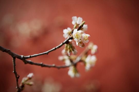 花香与诗意交融 北京大觉寺春色满园