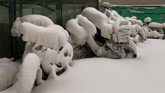 内蒙古呼伦贝尔降雪 积雪最深24厘米