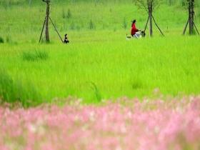 重庆南山矿区春暖花开 变身绿色生态游园