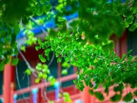 """北京雨后空气湿润 花草""""水灵灵"""""""