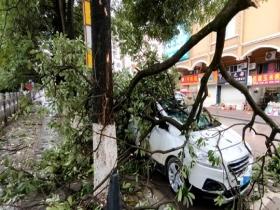 广西多地风大雨急 导致城市内涝大树倒伏