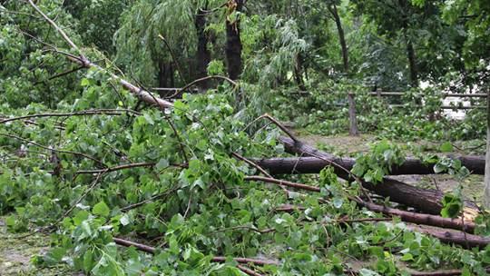 湖北安陆遭遇强对流天气 大风致树木拦腰折断