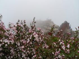 山东泰山海棠花开 春日感满满