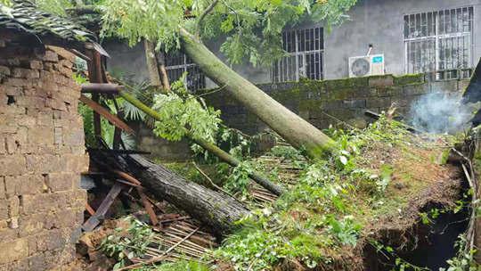 湖南桃源遭遇强对流 大树倒伏压垮房屋