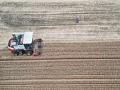 山東棗莊小麥喜開豐收鐮