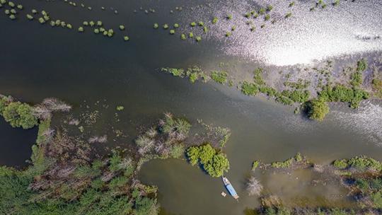长江涨水 湖北黄冈江滩公园树木浸水