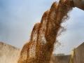 又是一年豐收季 安徽淮北小麥顆粒歸倉