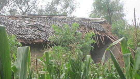 河南孟州遭遇强降雨 作物被淹房屋受损