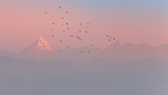 成都:远眺四姑娘山 皑皑白雪与飞鸟构成和谐画卷