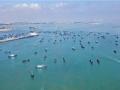 伏季休漁結束 福建石獅漁船出海
