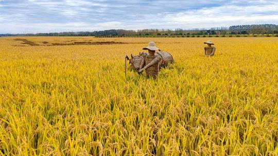 哈爾濱:稻草人形態各異田園趣味濃