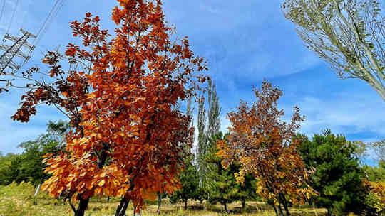 風景正美!北京西山國家森林公園秋葉配藍天 令人陶醉