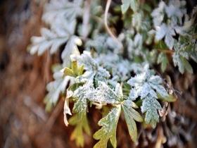 草木染霜 北京山区现霜冻尽显寒冷之威