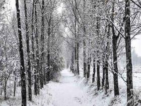 青海再遇降雪 大地银装素裹寒意十足