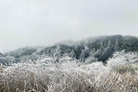 福建永安:白雪却嫌春色晚,故穿庭树作飞花