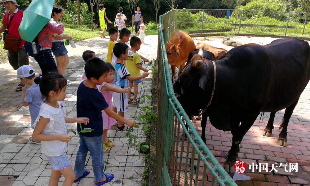 梧州动物园暑期受热捧-广西高清图片-中国天气网
