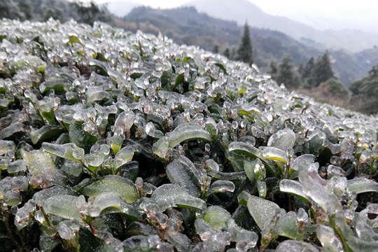 广西温低多地道路结冰