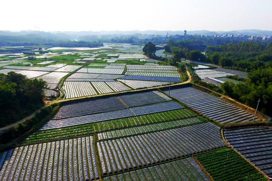 钦州万亩辣椒田园美景