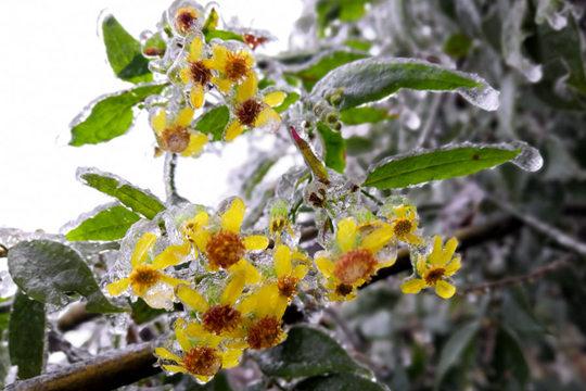 资源现雨凇如银枝玉叶