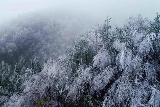 融安高寒山区雾凇景观