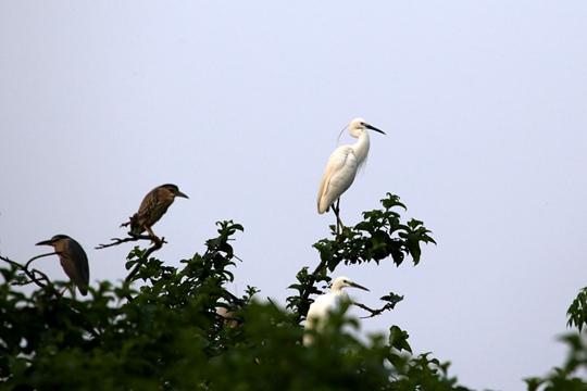象州古德湿地:鹭鸟天堂