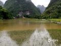 中国天气网广西站讯 受高空槽、低涡切变、偏南急流影响,昨天(8日)到今天(9日)早上河池市都安县普降暴雨到大暴雨。据统计,8日08时~9日08时全县有8个站点出现大暴雨,18个站点出现暴雨。强降雨导致多个乡镇农作物被淹,损失较大。目前,降雨仍在持续,尚未收到雨灾造成的人员伤亡消息。(图/向清才  文/黄丹虹)