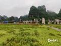 中国天气网广西站讯 7月8日晚上至9日早上,受高空槽、低涡切变共同影响,百色市平果县出现了大雨到暴雨,局部大暴雨,并伴有短时雷暴大风等强对流天气,其中坡造镇降雨达120.7毫米。此次强对流天气造成平果县坡造镇部分水稻倒伏,玉米地、果林被淹。(文/何翔  图/黄捷  蒙启放)